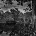 Withlacoochee River Landscape #22