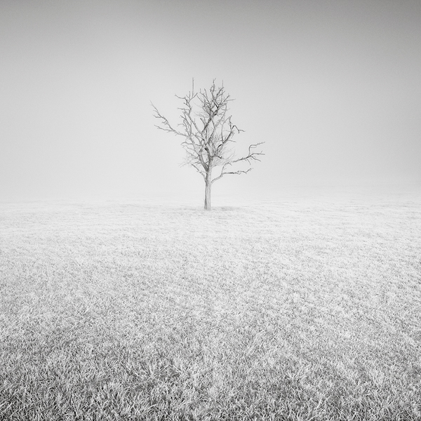 ponpon baum im winter
