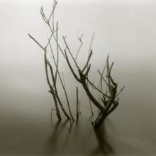 branchesinwater_faa