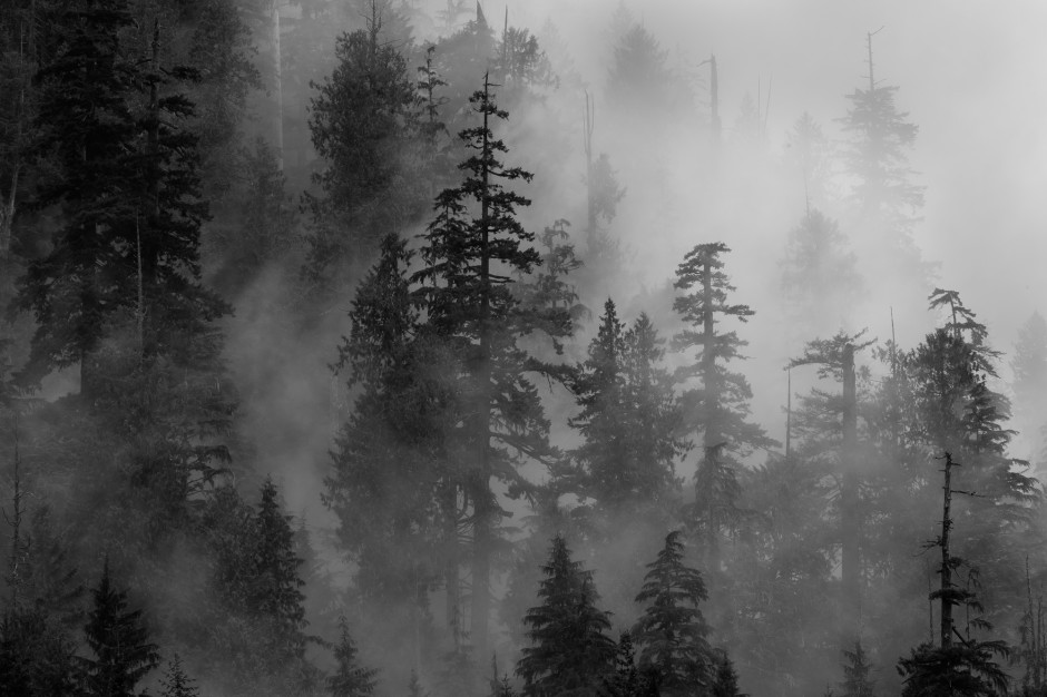 landscapes trees fog - photo #35