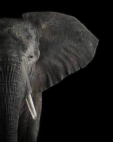 Brad Wilson Elephant6