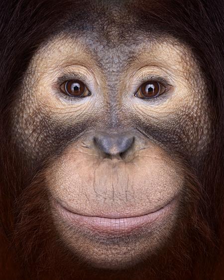 Brad Wilson Orangutan1