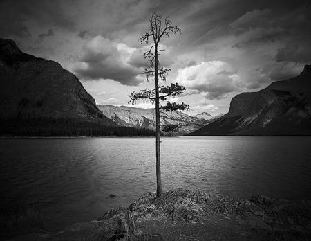 Lone Pine, Lake Minnewanka