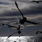 oiseaux-bd